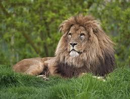 think you know where lions live let u0027s explore their habitat