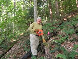 plants native to maryland wild ginseng in steep decline in maryland survey reveals q u0026a