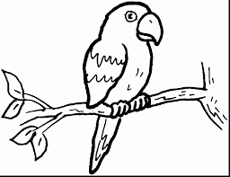 fantastic printable parrot coloring page with parrot coloring