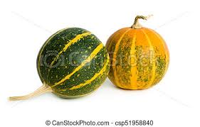 small pumpkins two small pumpkins green and orange small pumpkins isolated