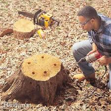 How To Make A Tree Stump End Table by How To Remove A Tree Stump Painlessly U2014 The Family Handyman