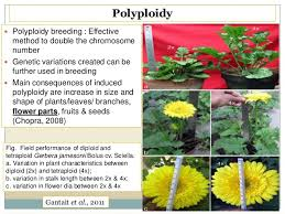 for different flower forms in ornamental crops