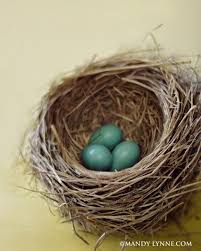 125 best nests images on pinterest bird nests eggs and birdhouses