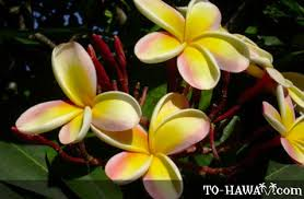 hawaiian plants hawaii flora hawaiian flowers and plants