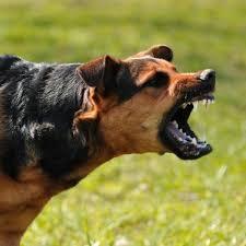 comment empecher mon chien de monter sur le canapé comment empêcher mon chien d être agressif 6 é