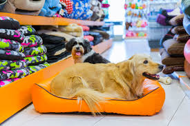 family pet and garden center the best careers for dog lovers