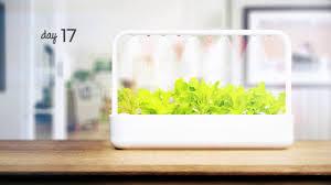 lettuce time lapse click u0026 grow smart garden 9 youtube