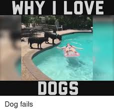 Fail Meme - why i love dogs dog fails fail meme on me me