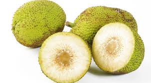 cuisiner le fruit de l arbre à amenagement de cuisine 19 arbre 224 plantation