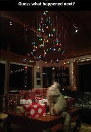 Cat Christmas Tree Meme - it was a nice christmas tree