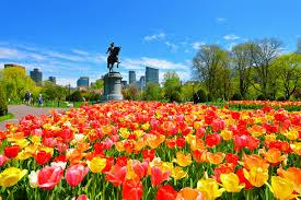 Flower Garden App boston public garden app offers interactive tour
