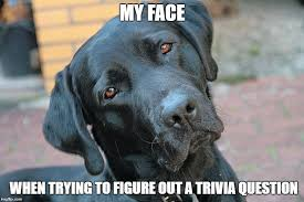 Quiz Meme - dog trivia questions take the quiz what every dog deserves
