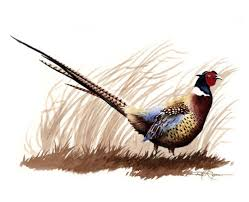 Pheasant Home Decor by 32 Best Pheasants Images On Pinterest Pheasant The Snow And Feather