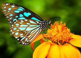 butterfly pics qygjxz