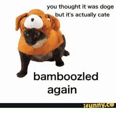 Funniest Doge Meme - you thought it was doge but it s actually cate bamboozle again funny