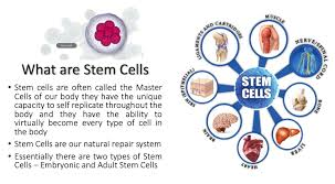 what are stem cells why you need them and how you can