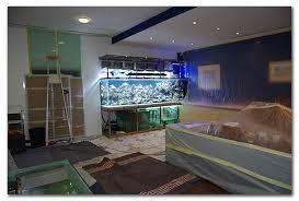 aquarium bureau instalation d un aquarium en deux jours