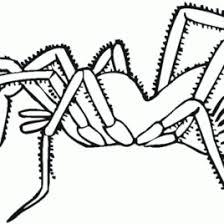 big spider coloring kids drawing coloring pages marisa