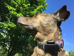 nuzzle gps collar consumer electronics reviews ratings