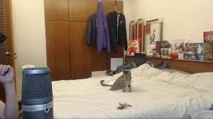 cat rage room wanna rage quit