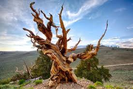 30 interesting facts about trees and wood the living urn