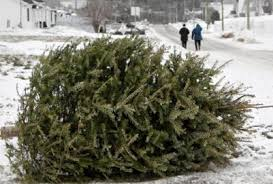 albuquerque pnm begin free christmas tree recycling jan 2