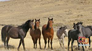 mustang adoption adoption event to feature utah s own cedar mountain and