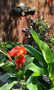 Canna Lilies How To Keep Your Canna Lilies Over The Winter U0026 2 More Tips