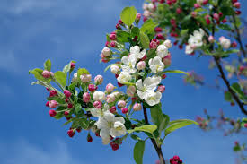 white flowers on black tree branch under sky during daytime free