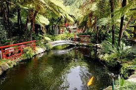 home garden ideas tropical garden design for a rejuvenating