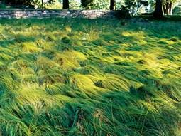 stylish grass garden design h26 for home design your own with