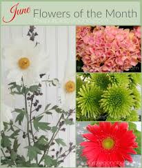 June Flowers - june flowers of the month u2013 the purple poncho