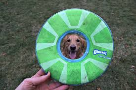 chuckit zipflight review a dog frisbee that really moves
