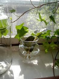 indoor water garden u2013 growing plants in water year round water