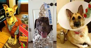Doggy Halloween Costumes 12 Dog Halloween Costumes 2014 Weknowmemes