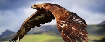 Cool American Flag Wallpaper Pictures Of Eagles With American Flag Wallpaper