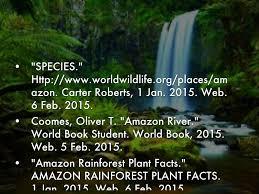 native plants in the amazon rainforest amazon rainforest by 543318