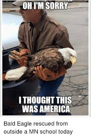 America Eagle Meme - ohim sorry i thought this was america bald eagle rescued from