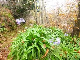 walking in madeira the flower island with a wild sideblog u2013 macs
