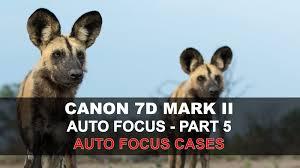 canon 7d mark ii auto focus part 5 5 af cases youtube