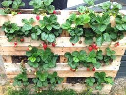 Garden Ideas With Pallets Best Scheme Pallet Raised Garden Bed Ideas Wood Pallet Ideas Of