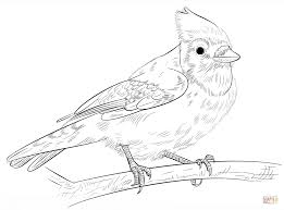 blue jay on a branch coloring page free printable coloring pages
