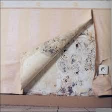humidité mur intérieur chambre probleme humidité rez de chaussée bricobistro