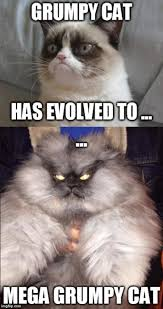 Grouchy Cat Meme - image tagged in memes grumpy cat funny imgflip