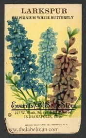 vintage seed packets everitt s seed store larkspur 499 vintage seed packet