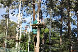 sydney the hills treetops sydney top 10 treetop adventures everywhere