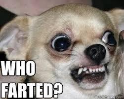 Meme Chihuahua - mean chihuahua memes quickmeme