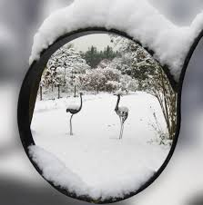 free images branch snow black and white ice weather snowy