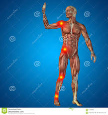 3d Human Anatomy 3d Human Man Pain Anatomy On Blue Background Stock Illustration