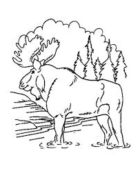 moose in the forest free animal coloring pages animal coloring